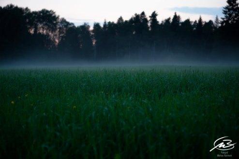 Vad döljer sig i dimmorna | Fotograf Borås: Mattias Björlevik