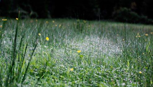 En matta av droppar | Fotograf Borås: Mattias Björlevik