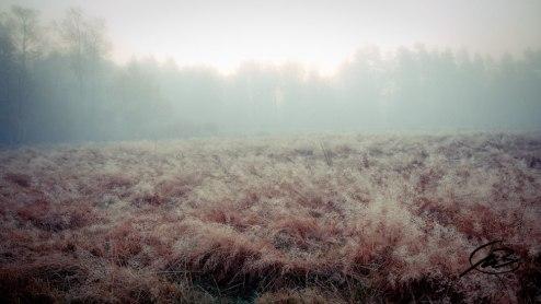 Dagg på ängens gräs och dimma framför skogen