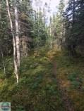 Waldspatziergang