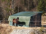 Hestebeite ved Myrer gård må vike plass for Follobanen. (foto: Sven Brun)