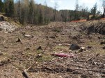 Avskoging for transformatorstasjon