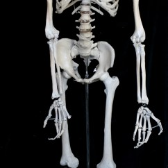Lab Values Skeleton Diagram Cat6 Keystone Jack Wiring Related Keywords Long Tail