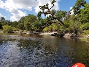 manatee eco tour kayaking