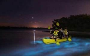 Bioluminescent Kayaking Tours Florida BK Adventure
