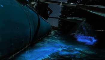 Florida Bioluminescence Kayaking Tours near Orlando and