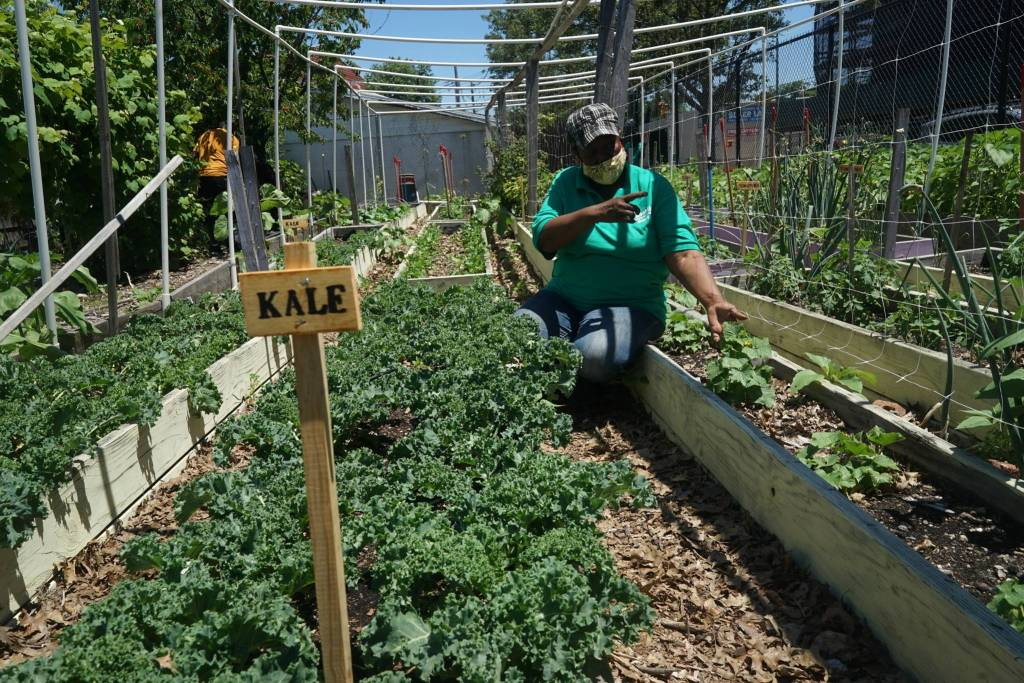 Brenda Dushane tends to the leafy greens in Green Valley Farm. Photo by Russell Frederick.