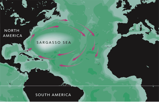Picture of the currents around the Sargasso Sea which is where the sargassum seaweed that hit the beaches of Puerto Rico came from