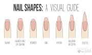 sorbet nails nail summer's