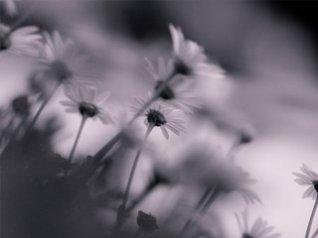 gray flower free blackberry