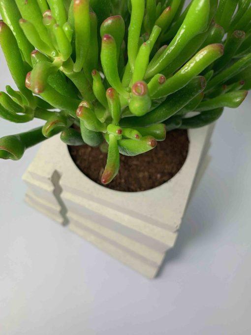 BLACKBETON - ARTISANAT D'ART - Collection végétale - TALOUL - béton blanc