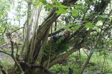 camouflagehide2