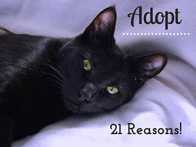 21 Reasons to Adopt Black Cat_cc