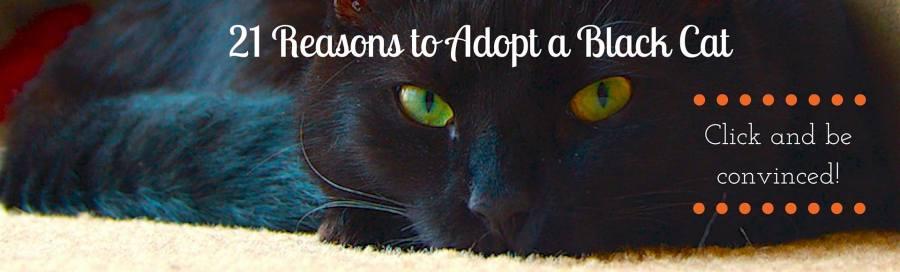 Adopt a Black Cat Banner