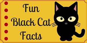 Black Cat News_wd