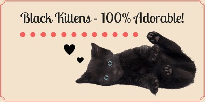 Black Kittens Collection