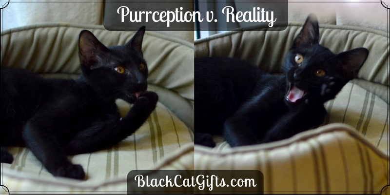 Purrception v Reality Cat Photography
