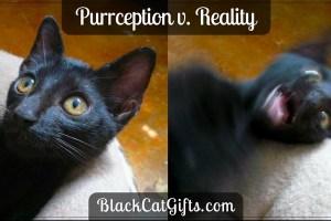 Purrception v Reality Possessed