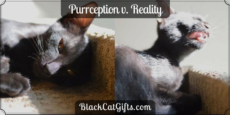 Purrception v Reality Sneeze