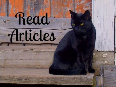 Black Cat Articles