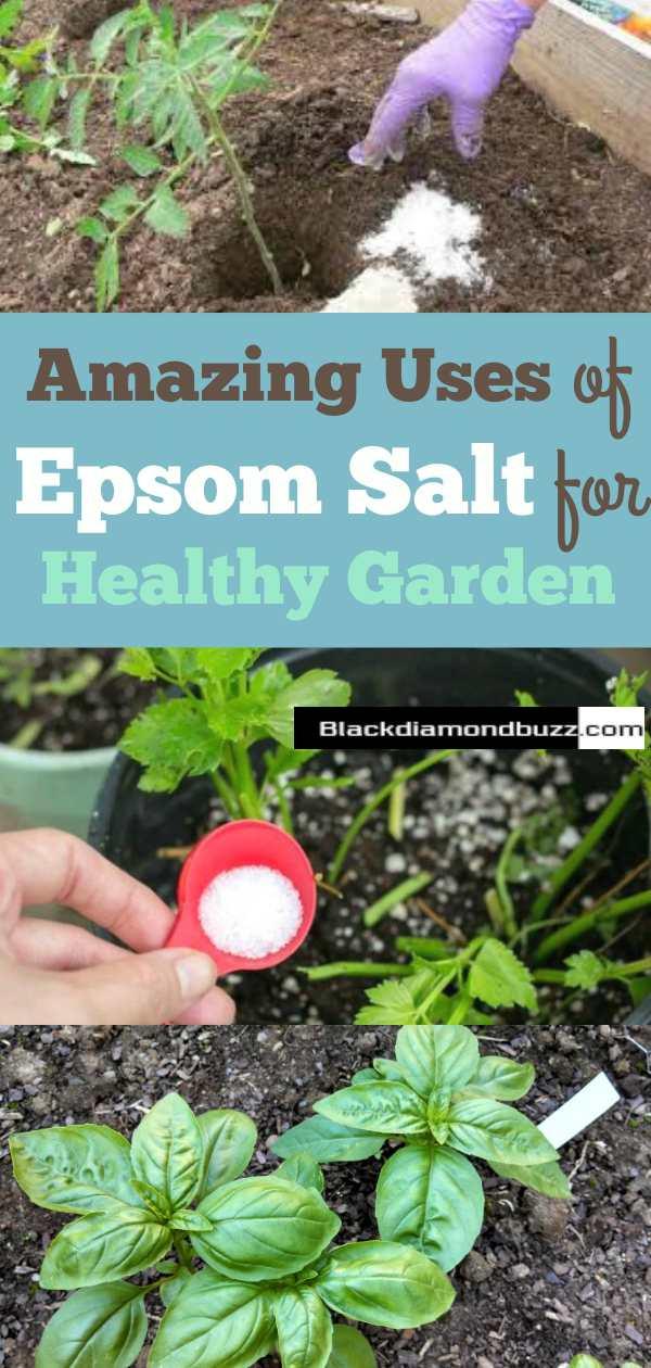 Uses of Epsom Salt for the Garden