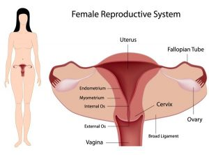 natural cures for bacterial vaginosis