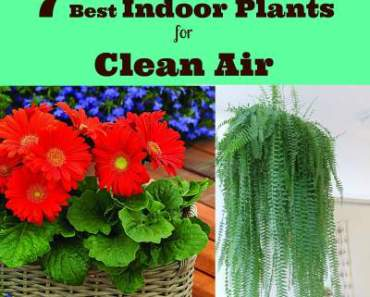 7 Best Indoor Plants for Clean Air