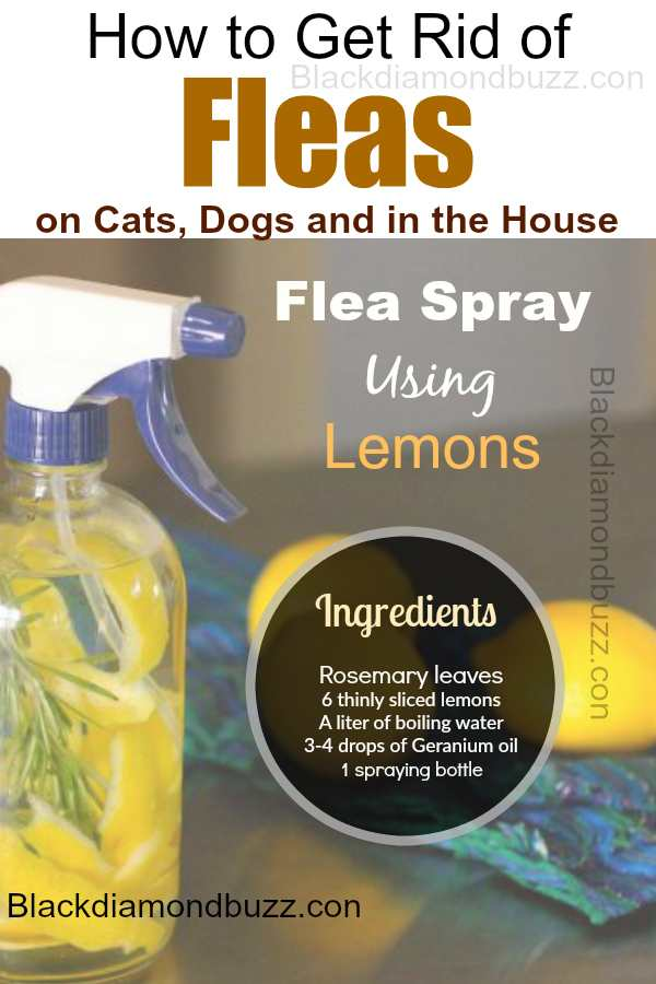 Lemon fleas spray-How to Get Rid of Fleas Fast: in the Home,