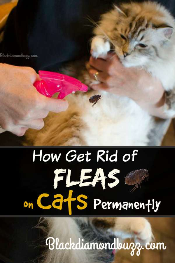 How To Get Rid Of Fleas Fast In The Home On Dogs And
