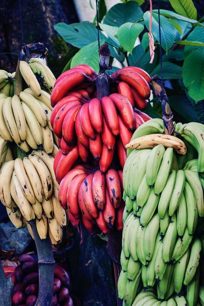 Fruit Costa Rica