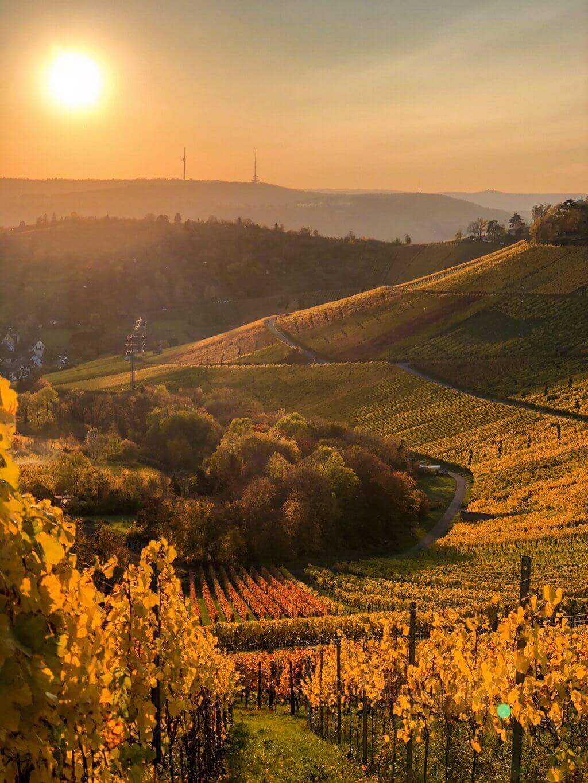 Wandelen in de wijngaarden van Stuttgart