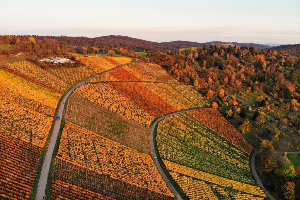 Stuttgart wijngaarden in de herfst