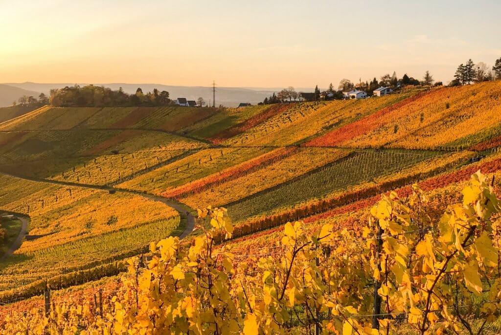 Stuttgart wijnroute Rotenberg Uhlbach