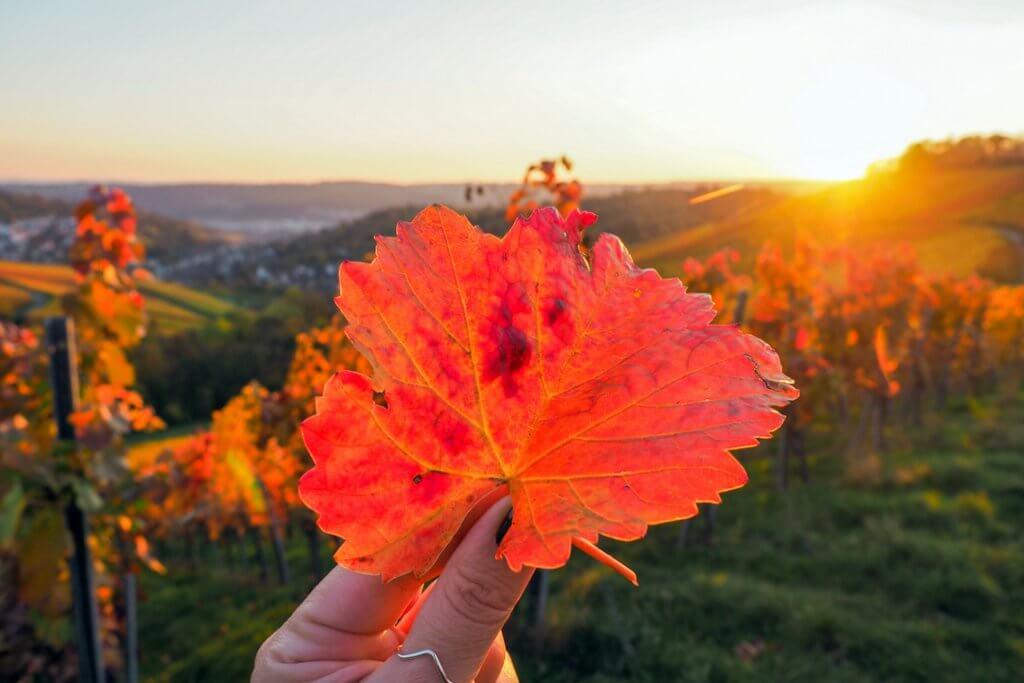 Wijngaarden Stuttgart herfst