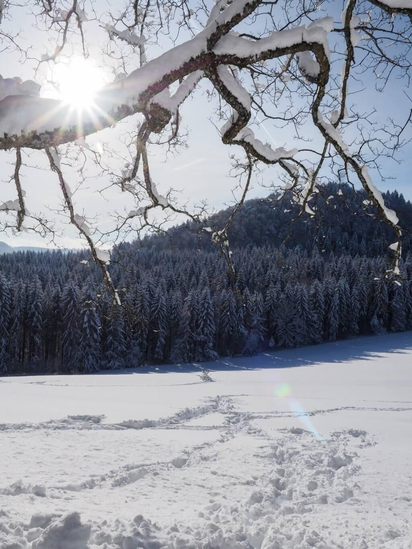 Winterzon in de Schwäbische Alb