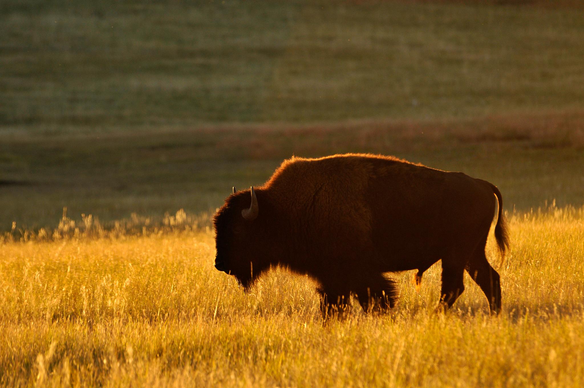 weather buffalo south dakota