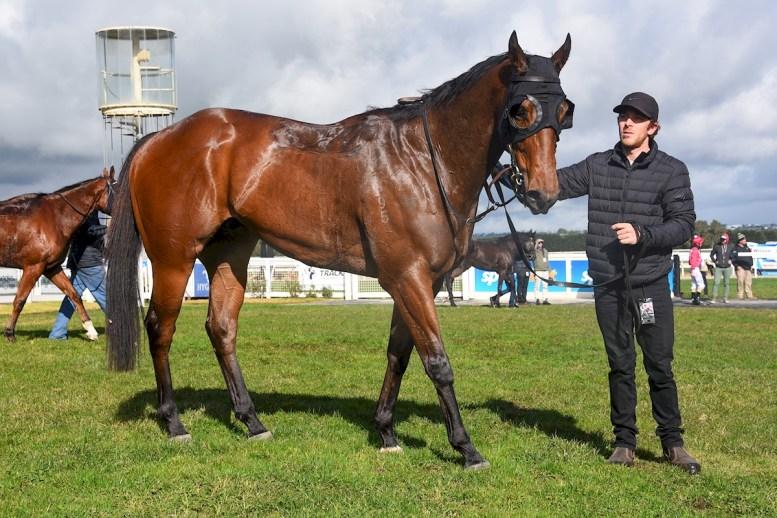 Sheet Lightning (NZ) winning the The Haymarket Maiden Plate at Sportsbet-Ballarat (Pat Scala/Racing Photos)