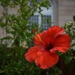 Flower 2-inBloom-0044