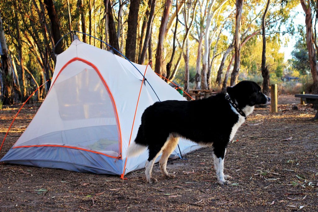 dog standing next to tent