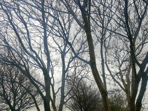 The council is making use of tree preservation orders