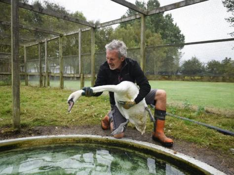 Paul Fothergill, maintenance manager at Swan's Rest, with one of the swans
