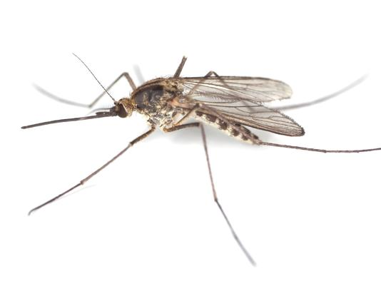 About 20% of us are especially delectable to mosquitoes.