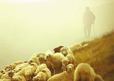sheep_t580