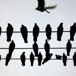silhouttes of pigeons on wires