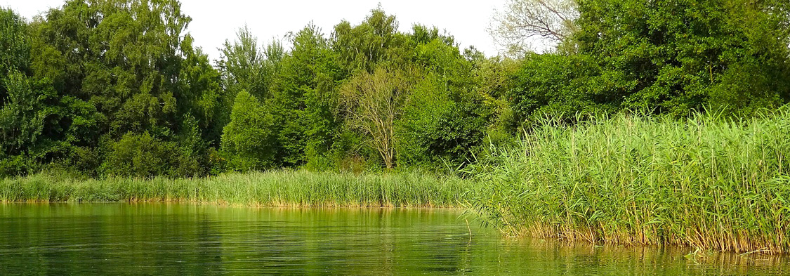 Evaluación ambiental expost ¿por qué debería ser obligatoria?
