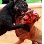 dogfight2