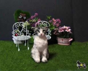 Bobby de Cat