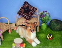 April de Shetland Sheepdog