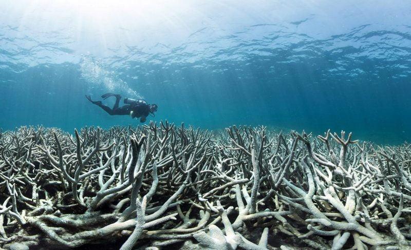 coral bleaching yang terjadi di great barrier reef, australia