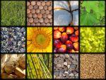 14 Kelebihan & Kekurangan Energi Biomassa